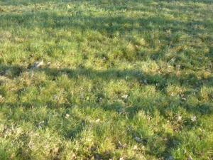 Een compositie van gras en verdorde bladeren zoals ze alleen maar in Vremde te vinden is.